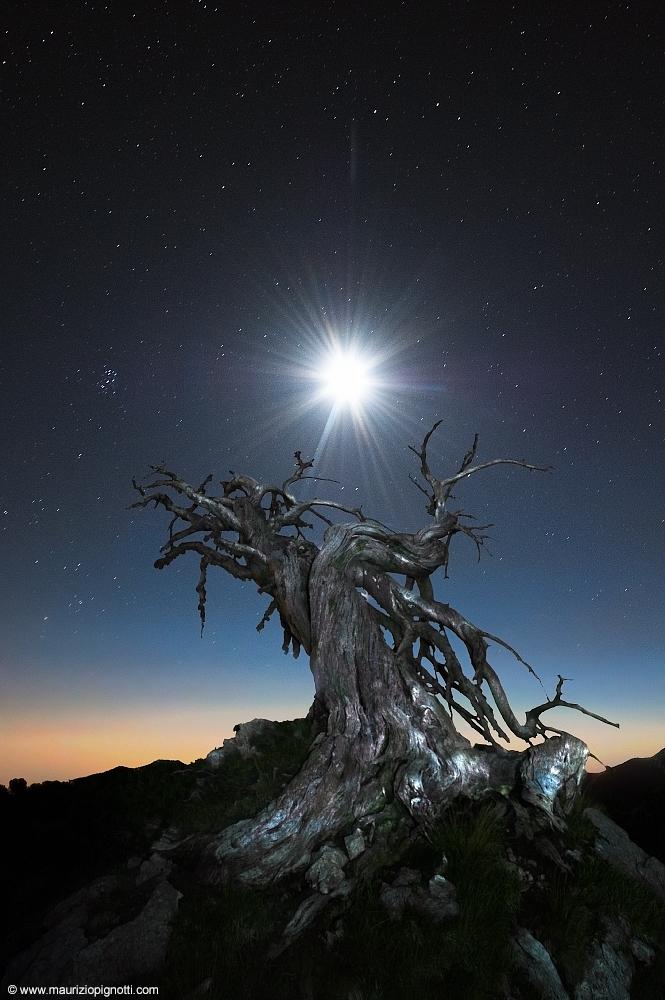 @-Dawned-Lunar